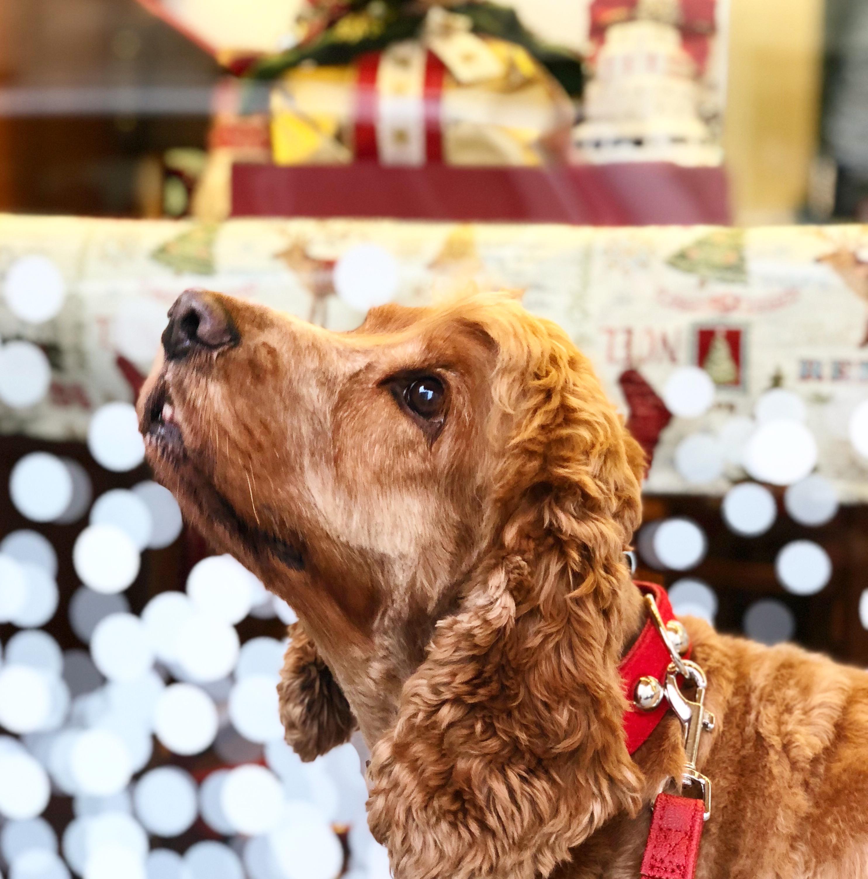 Qualunque sia il vostro stato d'animo, qualunque sia la vostra battaglia quotidiana, non rinunciate mai alla magia del Natale!