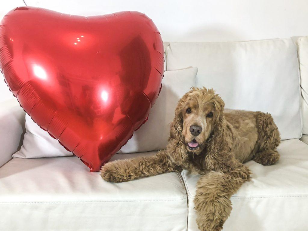foto cane san valentino