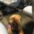 In treno con il cane si può, MA…