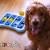 Stress nei cani: cause e sintomi