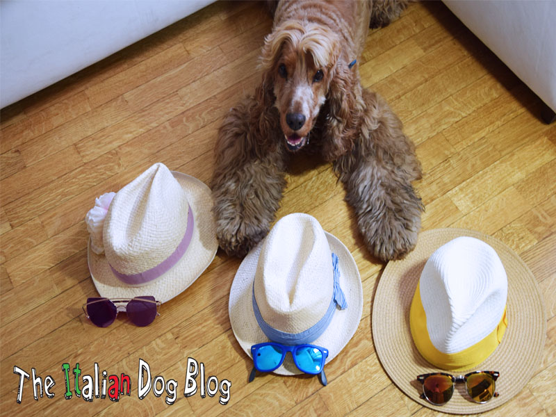 occhiali cappelli